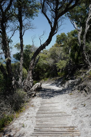 Shot at Wilsons Promontory, Gippsland. Beauty In Nature Branch Day Forest Growth Landscape Mountain Nature No People Outdoors Scenics Sky The Way Forward Tranquil Scene Tranquility Tree Water