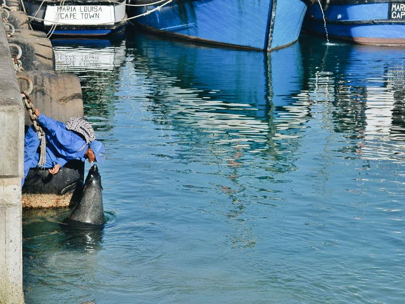 Feeding time. Seal Harbour Sealife Ocean Nofear Feeding Animals EyeEm Best Shots EyeEm Nature Lover Eyeemphotography
