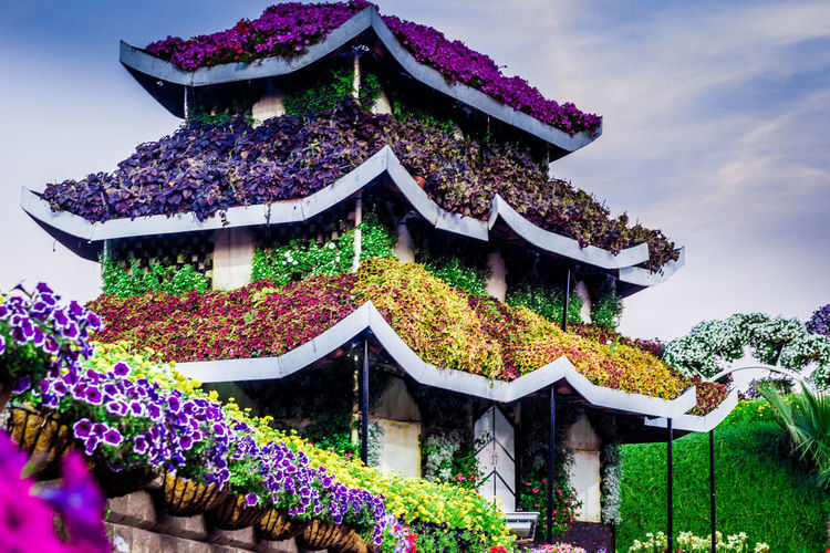 Architecture Beauty In Nature Building Exterior Built Structure Cloud - Sky Colorful Houses Colors Day Fancy Flower Flower House Flowerporn Flowers Garden Garden Photography Gardening Gardens House Low Angle View Nature No People Outdoors Popular Photos Sky Tree