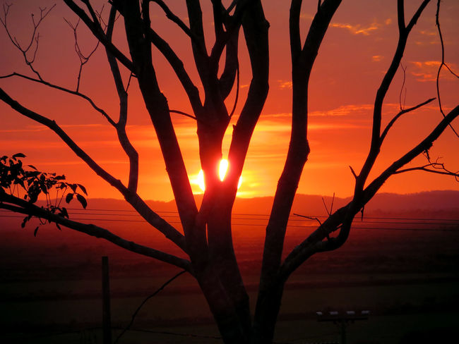 Beauty In Nature Growth Idyllic Majestic Nature No People Non-urban Scene Orange Color Outdoors Pantanal Plant Remote Scenics Silhouette Sky Sun Sunlight Sunset Sunset Trees  Tranquil Scene Tranquility Tree Silhouette Tree Sunset Tree Trunk
