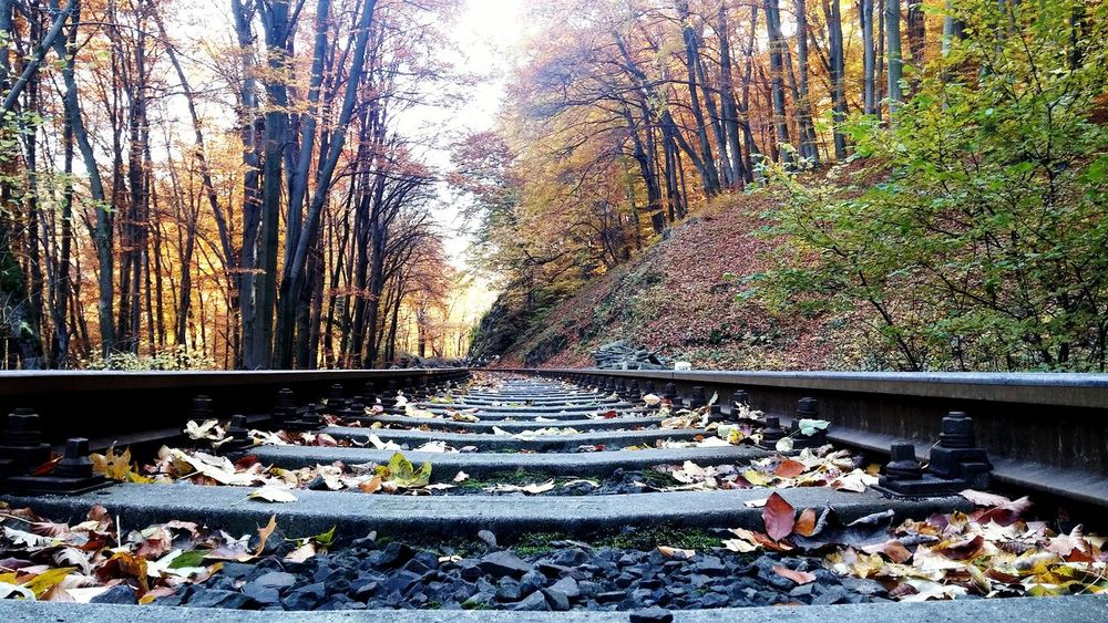 Train Tracks Rails Forest