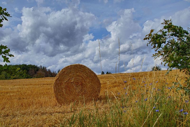 Field Plant Cloud - Sky Sky Land Bale  Landscape Hay Agriculture Tree Rural Scene Tranquility Tranquil Scene Nature Environment Beauty In Nature Rolled Up Farm Scenics - Nature Day No People Outdoors Stoppelfelder Nach Der Ernte Rundstrohballen