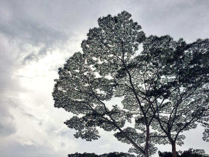 Kranji Marsh Nature Nparks Nparksbuzz Sky Tranquility Tree
