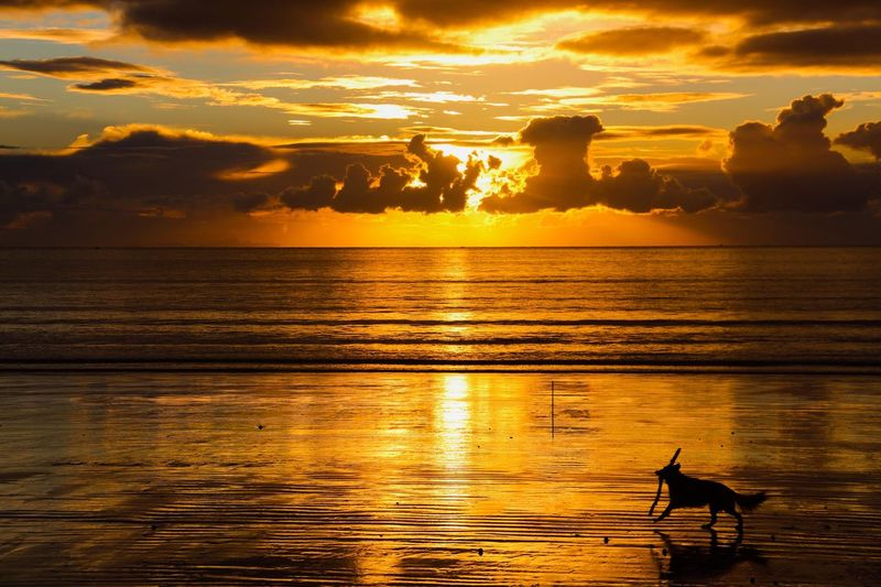 Dog Sunset Water Sky Beauty In Nature Sea Cloud - Sky Scenics - Nature Tranquility Reflection Nature Animal Themes Idyllic Animal Tranquil Scene Silhouette Sunlight Orange Color Horizon Over Water