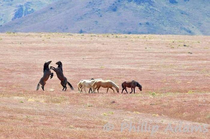 Photography Taking Photos Horse Beautiful Awww White Horse <3 Horses Beautiful Horses I Love Horses
