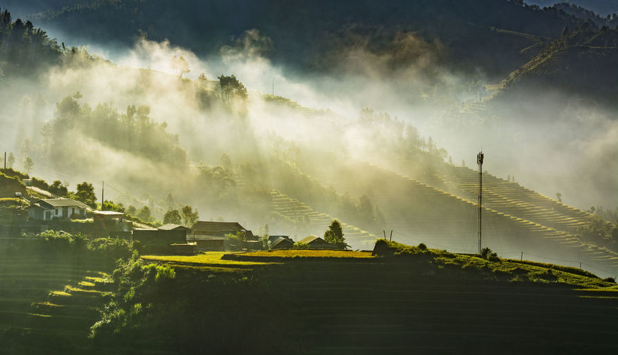 Scenic view of paddy field during morning