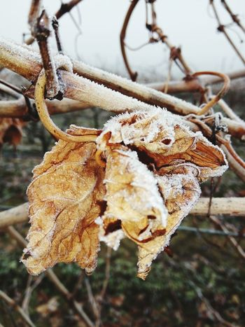 Nature Cold Temperature Nature Day