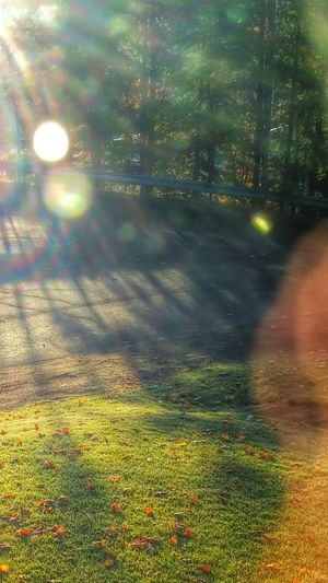 Illuminated Nature Creative Photography Creative Light And Shadow Reflection Morning Light This Morning. Sunbeam High Angle View Autumn Colors No People Enjoying Life Smartphonephotography