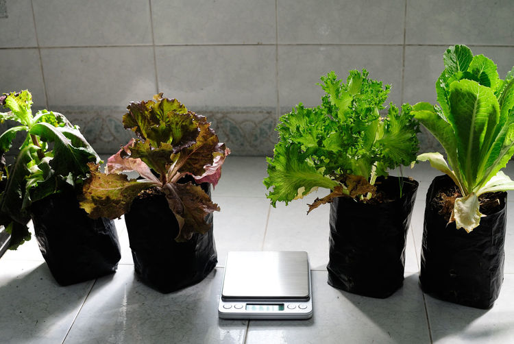 Weight scale amidst potted plants on floor