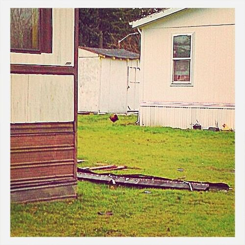 lol , walking through some trailer park & saw chickens