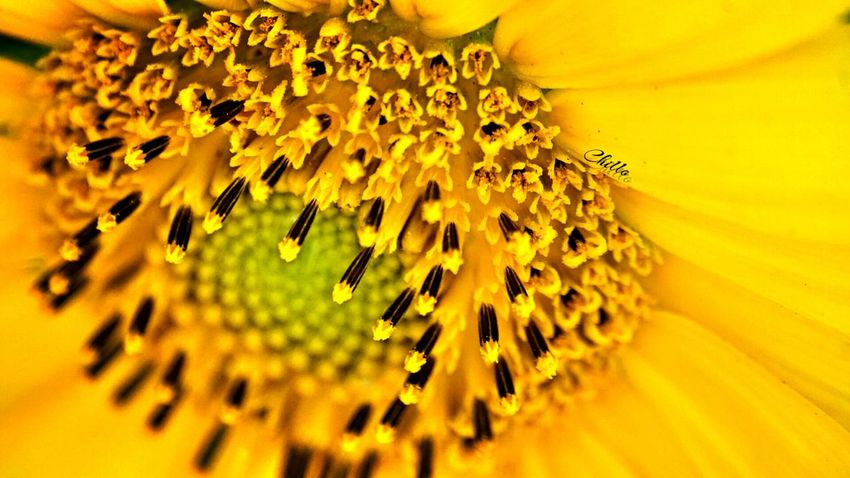 Summer glow. Nature EyeEm Nature Lover Photography Eye4photography  Sony A6000 Macro Macro Photography Flowers Flowerporn Beauty