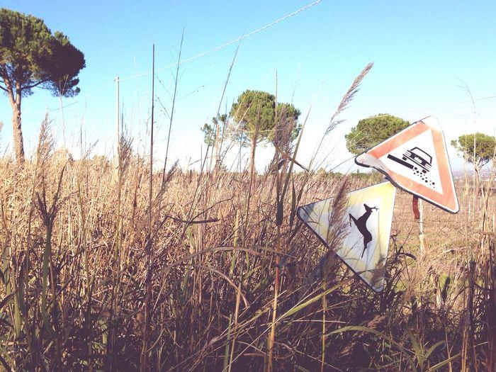 Once Upon a time 📷 Sofiavicchi Sofiavicchiconceptdesign Strada Campagna Countryside Country Life Ontheroad Codicedellastrada