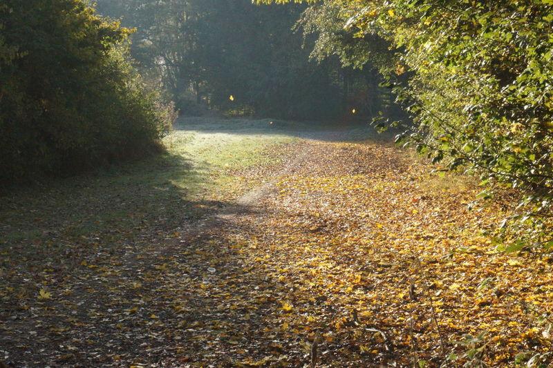 7894 Falling Falling Autumn Leaves Falling Leaves Floor Level Leaves Frosty Golden Golden Leaves Green Leaf Leaves Leaves On The Ground Leaves 🍁 Leaves🌿 Path Pathway Shade Sunlight Treelined Treelined Path Trees