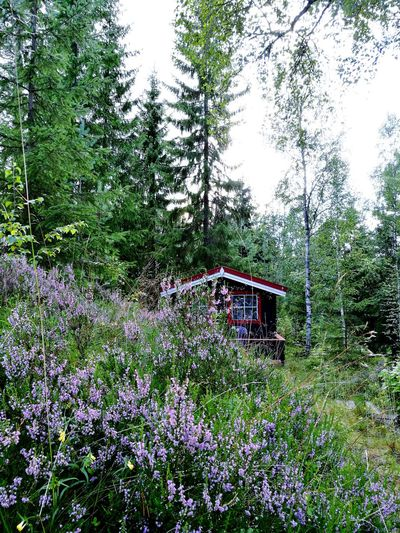 Finally arrived at my cabin for the nightHidden Gems  Cabin Life Norwegian Nature
