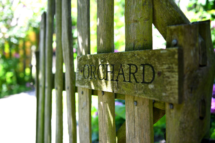 Focus On Foreground No People Plant Nature Boundary Wood - Material Barrier Outdoors Green Color Fence Close-up Trunk Park Tranquility Message Orchard Apples Summer Garden Gate Carving Wooden Gate
