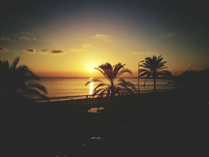 Palm Tree Sunset Water Scenics Vacations Lebanon Middle East