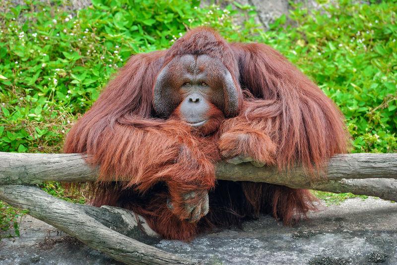 Portrait of monkey on tree in zoo