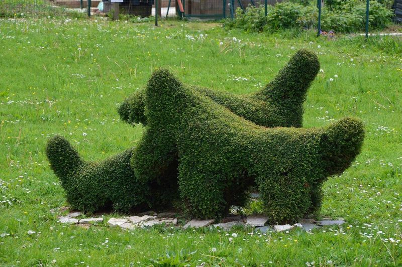 Jardins familiaux à pontault combault en Seine et marne Ile De France Pontault Combault Seine Et Marne Jardin Jardins Familiaux Dog Dog In Grass Chiens Green Color Grass Growth Outdoors Day Nature Field No People Plant Park - Man Made Space Statue Sculpture Beauty In Nature Water Mammal France