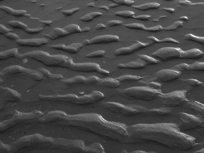 Backgrounds Sunlight Water High Angle View Full Frame Sand Repeating Patterns Delawarebay Nature Outdoors No People Sea Life Underwater Swimming UnderSea Day Close-up