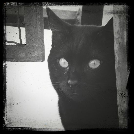 Blackandwhite Streamzoofamily Eye4black&white  Catpics