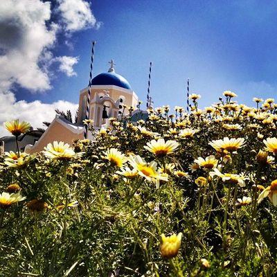 Flowers in Oia Santorini Greece Bluesky Insta_europe Instagreece Ig_greece
