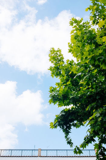 Rooftop Beauty In Nature Blue Cloud Cloud - Sky Cloudy Day Fujifilm_xseries Green Green Color Growth Low Angle View Lush Foliage Nature No People Outdoors Scenics Showcase June Sky Tranquil Scene Tranquility Tree VSCO Vscofilm