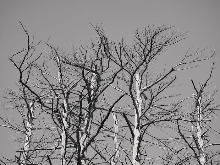 Trees Abstract Animal Themes Bare Tree Beauty In Nature Blackandwhite Branch Clear Sky Day Ensemble Nature No People Outdoors Sky Tranquility Tree Trees And Sky