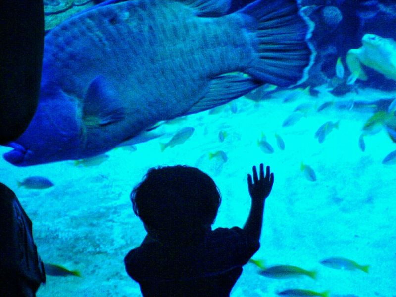 """What I Value is Spending Time With My Family """"Wow! The fish is so big"""" said my son. Leisure at Aquaria Klcc Malaysia"""