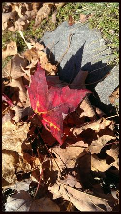 Autumn Colors Leaves Colorful