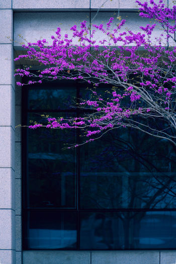 四月花开一片,倒觉处处春天,有人穿着短袖,有人羽绒坎肩。 Flowering Plant Flower Built Structure Building Exterior Architecture Tree Outdoors Spring