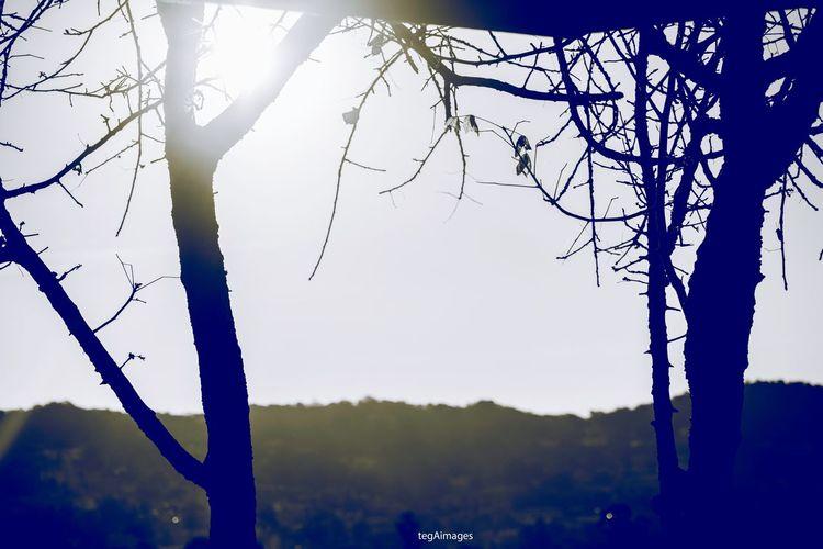 🍂🍃 EyeEm Eye4photography  EyeEm Best Shots EyeEm Gallery Eyeemphotography EyeEm Nature Lover Summer ☀ EyeEm Selects EyeEmBestPics Sun Tree Branch Sunlight Sky Bare Tree Tree Trunk Dead Plant Woods Plant Life Growing