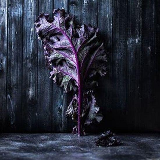 purple kale. 😍 Kale Purple Darkfood Chiaroscuro  Foodstyling Foodphotography Foodshare Foodstagram Greens VEGANLIFE Vegan Winter Raw