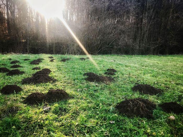 Molehills in the sun Sunlight ☀ Sunlight Molehills Molehill Mole Grass Nature Tree Growth Day No People Outdoors Beauty In Nature Animal Themes
