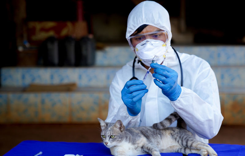 Veterinarians wear ppe for canine distempervirus  vaccine. cats and dogs, veterinary medicine.