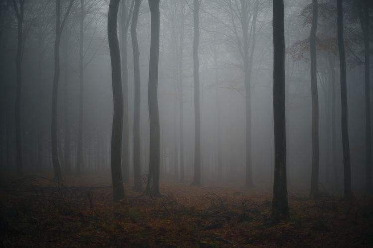 Autum Autumn