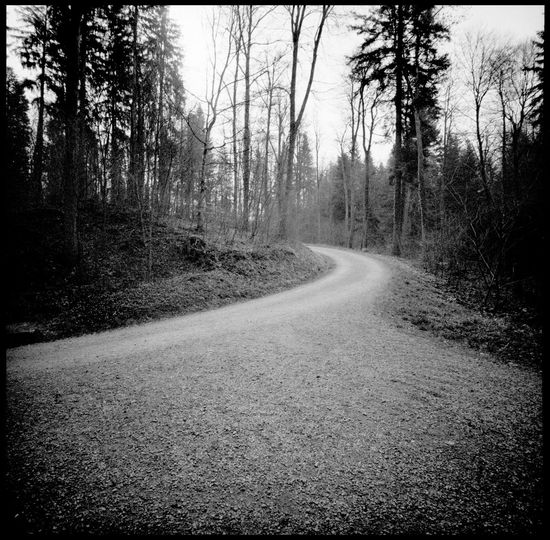 Round ways Alps Analogue Photography Birches Black And White Forrest Goldau Leaves Light Lomography Lonesome Road Mount Rigi Mountain Forrest Mountains Nature Nature Photography No People Round Way Spring Swath Swiss Alps Switzerland Travel Winding Road The Great Outdoors - 2017 EyeEm Awards