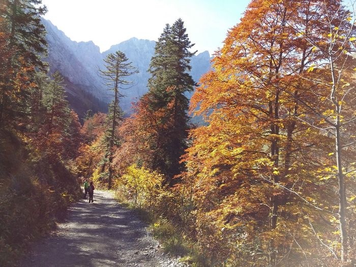 Die Ahornböden Bei Eng In Austria Herbst In Den Bergen Autumn Beauty In Nature Change Day Forest Growth Landscape Leaf Nature Outdoors Real People Scenics Sky Tranquility Tree