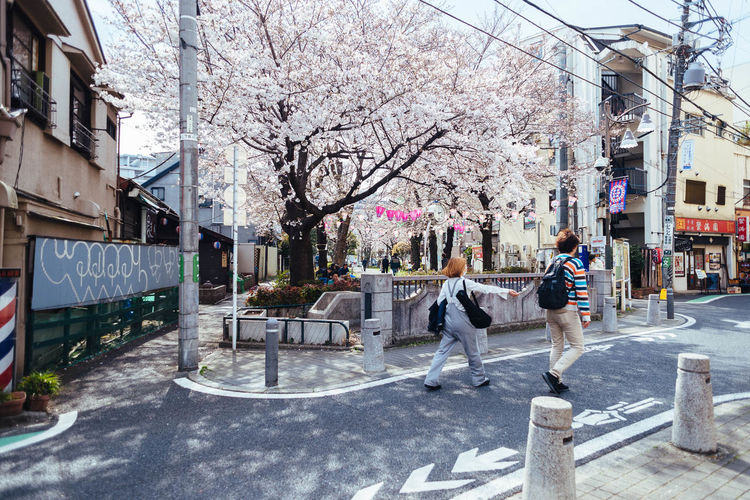 Cherry Blossoms in Hatagaya Adult Architecture Building Exterior Built Structure City Couple - Relationship Day Flower Full Length Men Nature Outdoors People Real People Sakura Tree