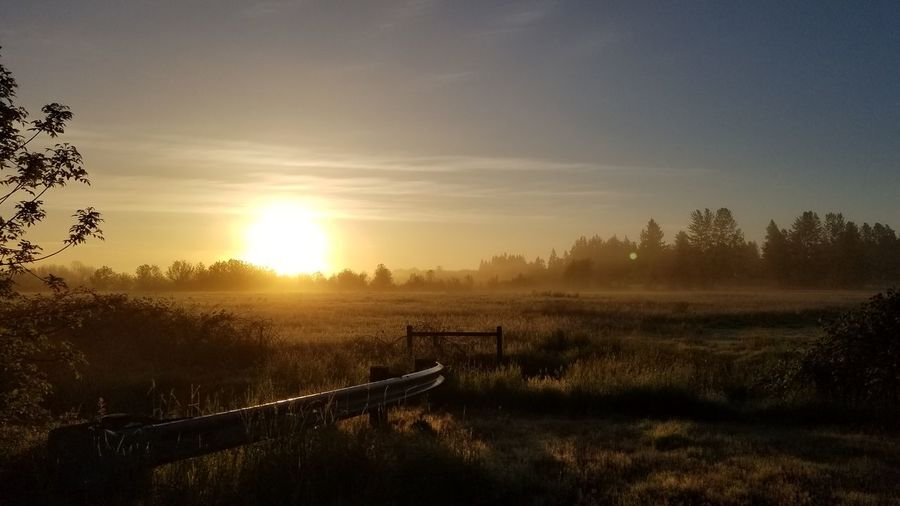 Sunrise Sunlight Rural Scene Scenics Sun Landscape No People Fog Nature Summer Beauty In Nature Outdoors Sky Grass Day Trees Samsung Galaxys8 Noedit Nofilter First Eyeem Photo