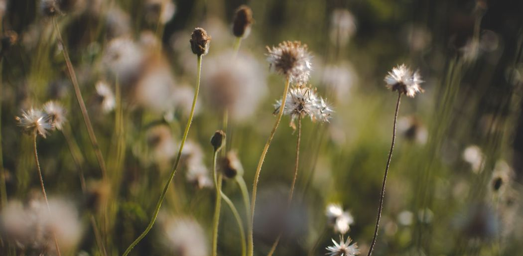 Plant Fragility Flower Flowering Plant Vulnerability  Beauty In Nature Growth Focus On Foreground No People Day Plant Stem Selective Focus Outdoors Field Freshness Tranquility Nature Close-up Land Flower Head