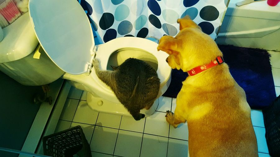 High angle view of dog looking at cat on toilet bowl in bathroom at home