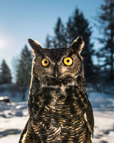 Close-up portrait of owl against sky during winter