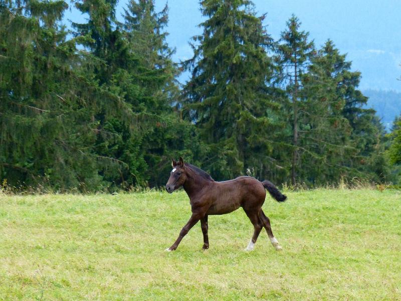 Horse Horse <3 Horses Bavaria