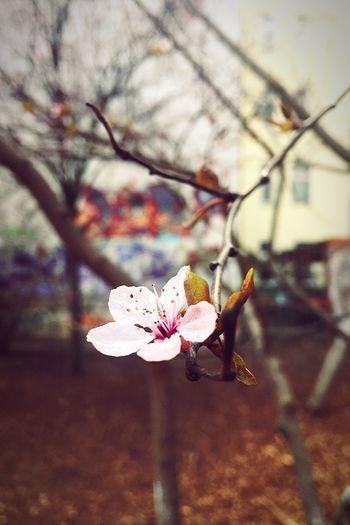 Spring Urban