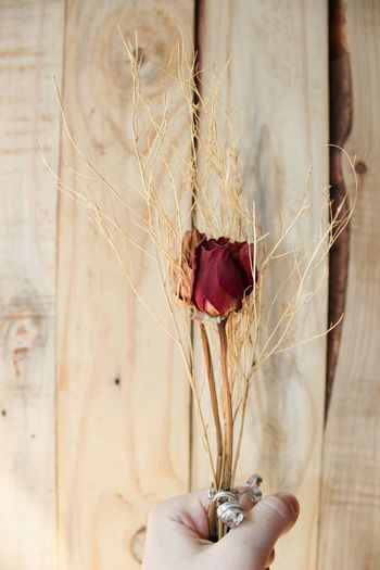 Cropped Image Of Person Holding Dried Rose Against Wooden Wall