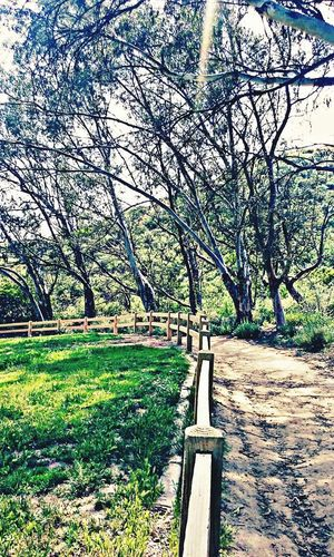 A long walk along the gated road... MyPhotography Photooftheday Photography Lovetohike Hikingtrail Granadahillsca GranadaHills Greatviews Greatendurance LoveMyWork Beautiful Nature DontQuit Getitdone