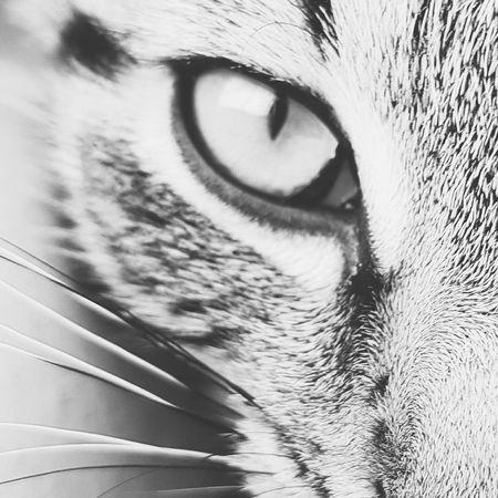 Hello World Cateyes Cats Animals Animal Photography Macro Photography Photography