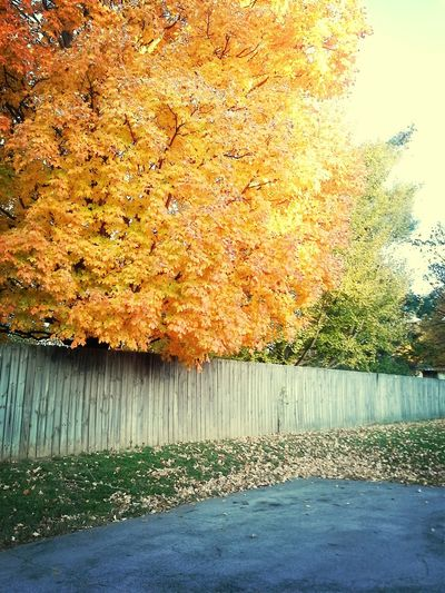 leaves before they fall Hello World