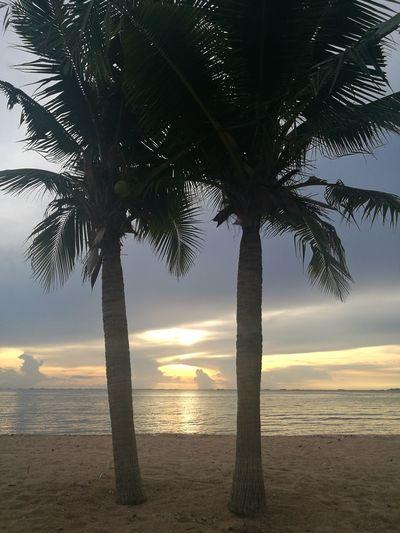 Beach Sunset Sea Tree Sky Scenics Beauty In Nature Sun Sand Sunlight