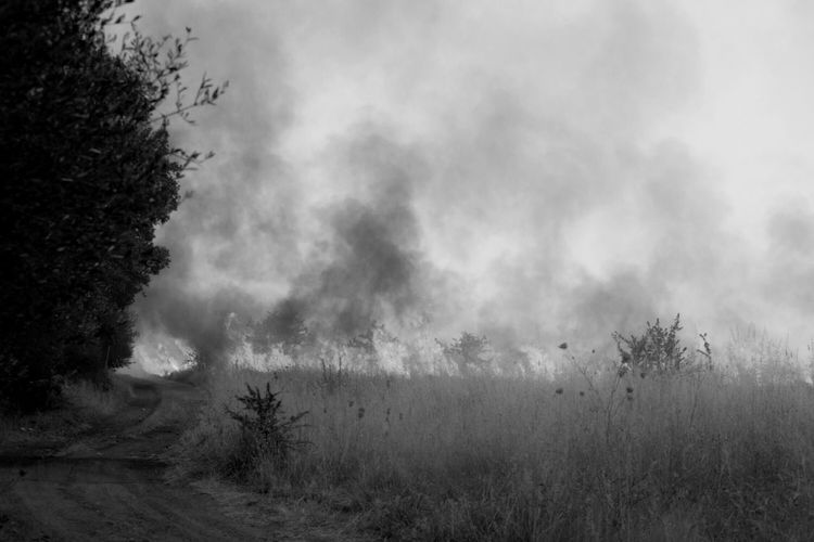 Wildfire Flames Sardegna Outdoors Fire And Flames Nature Nikon D5200 Bnw_friday_eyeemchallenge Bnw_life_in_motion B&w Nature Fire - Natural Phenomenon Fire